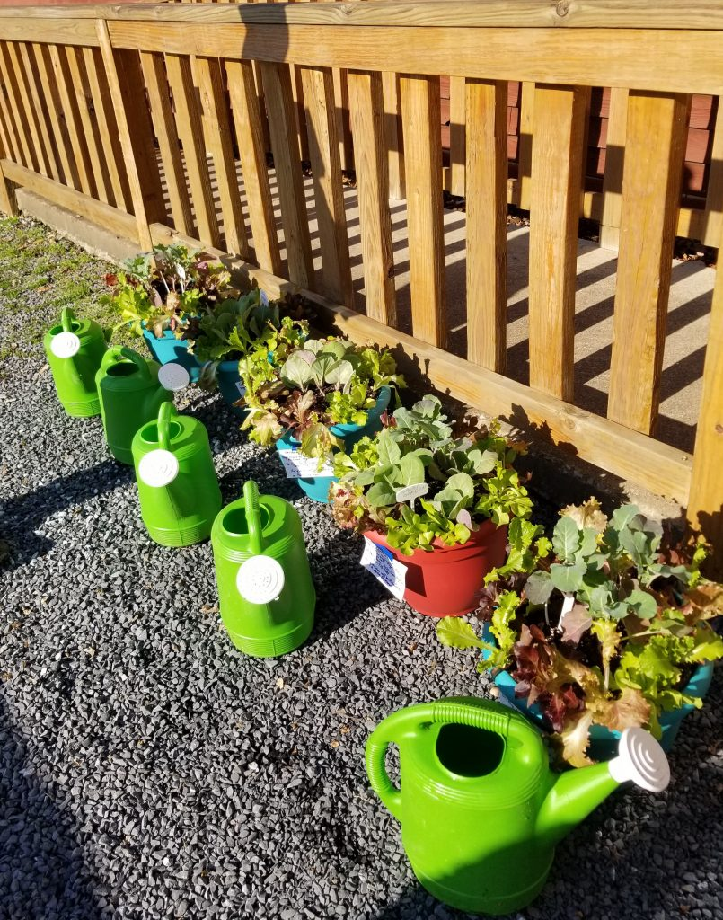 Container Gardens Donated to Food Pantry