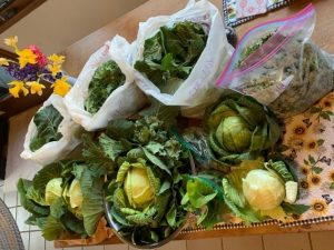 Overwintered Produce from Amissville gaden