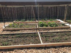 New community garden in Luray